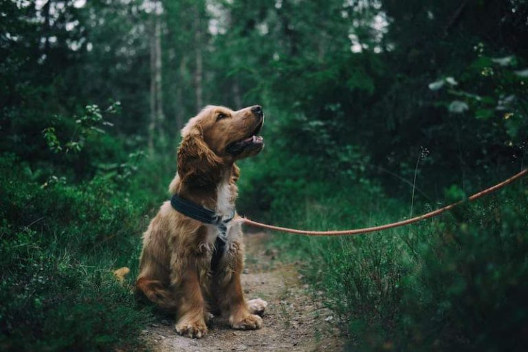 best-business-ideas-dog-walking