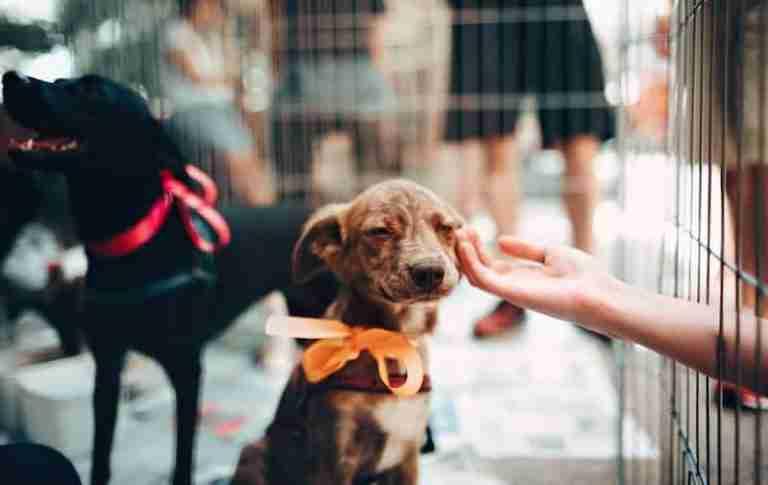 best-business-ideas-pet-grooming